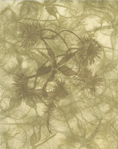 Sally Ayre - Shift #4 (Clematis)