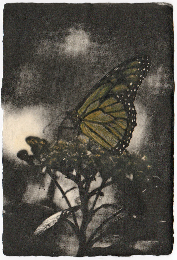 Liz Menard - Solitary Monarch