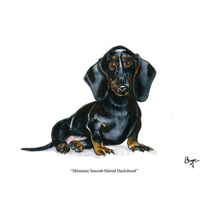 CSP Greetings - Smooth Haired Mini Dachshund Greeting Card