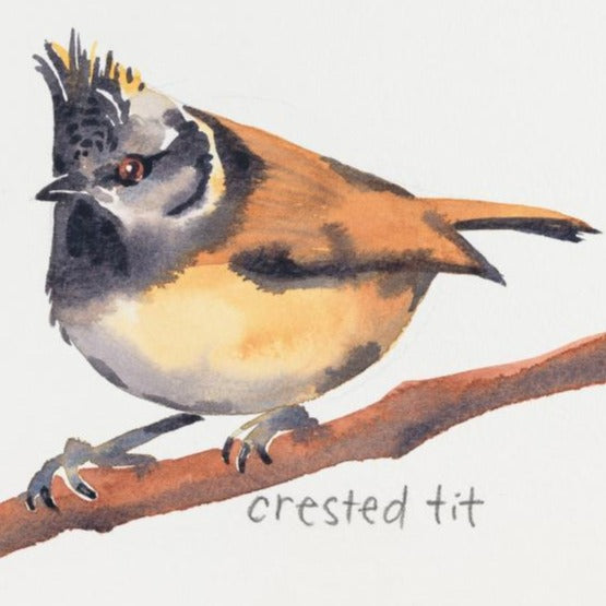 """Crested Tit""Original by Sarah Bell"