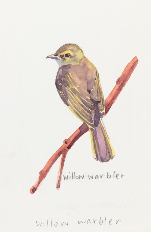 """Willow Warbler""Original by Sarah Bell"