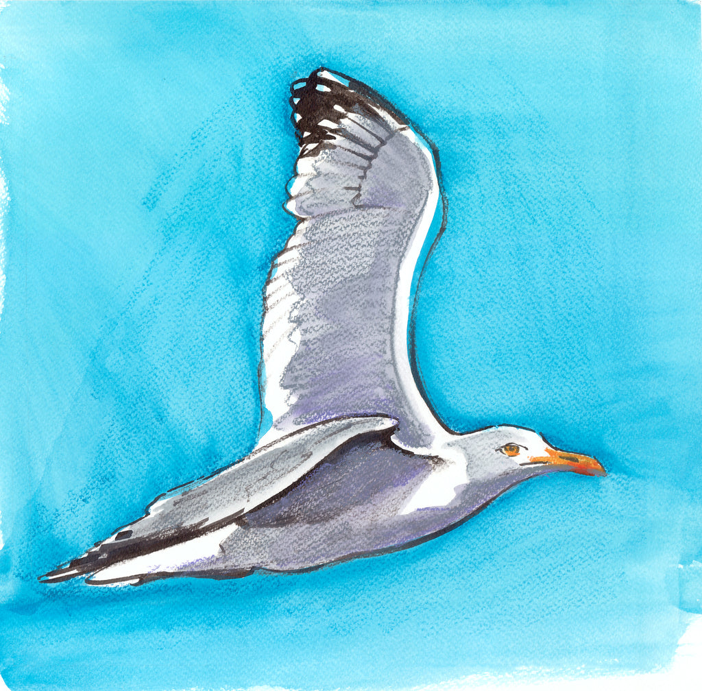 Original watercolour of 'Herring Gull in Flight 1'