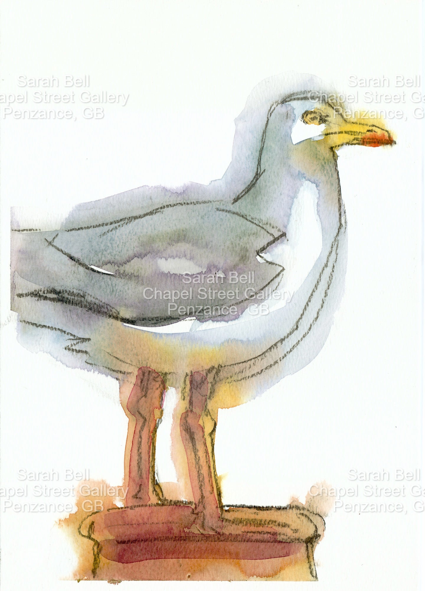 "Herring gull 1"" by Sarah Bell Blank Greeting Card"