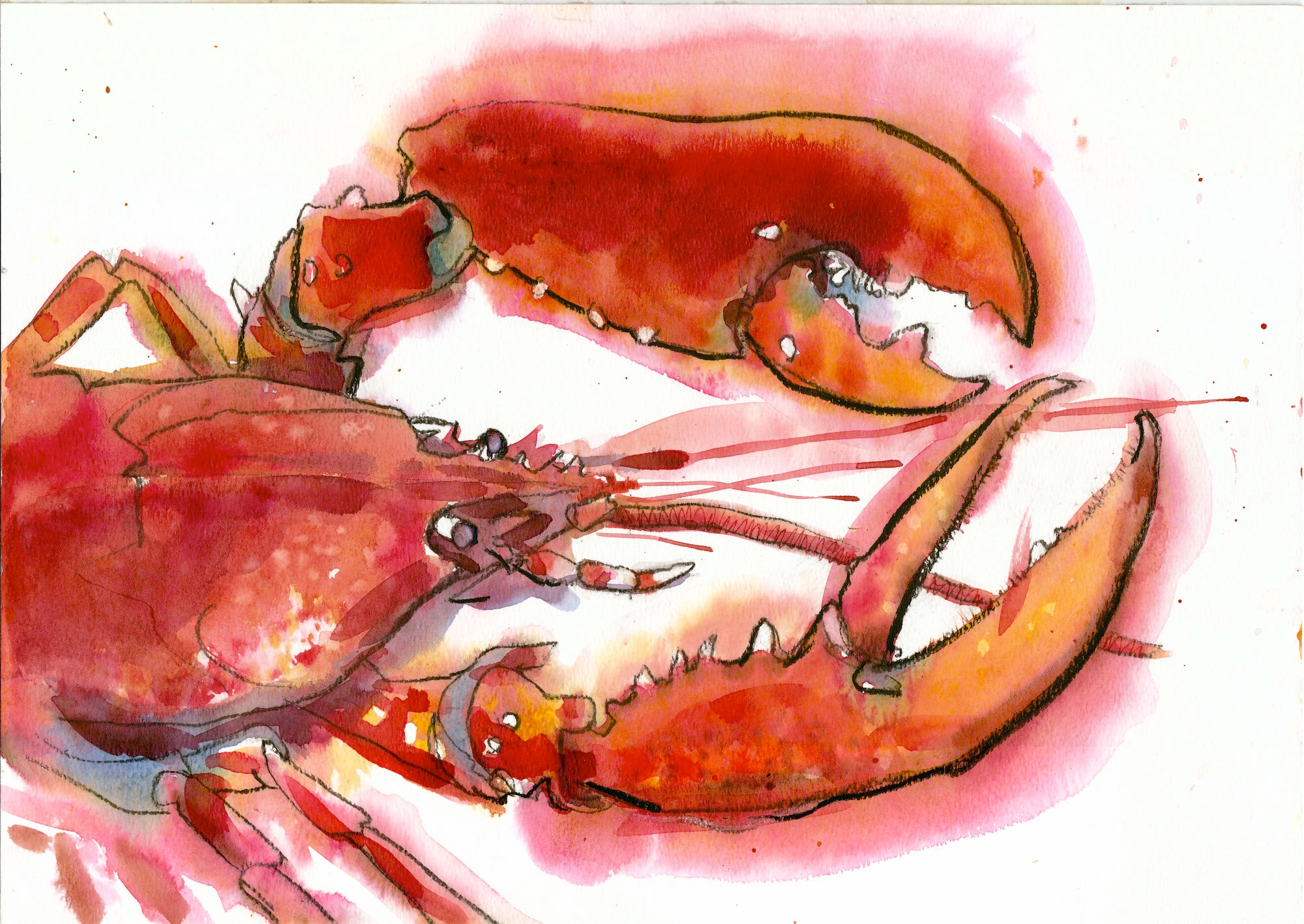 """Newlyn lobster 2"" Signed Giclee Print Mixed Media by Sarah Bell"