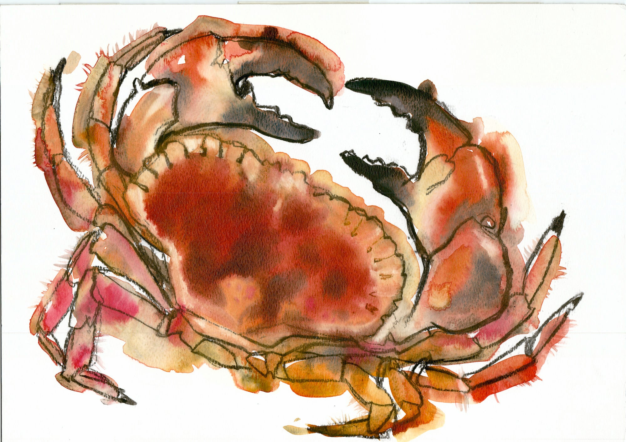 """Newlyn Crab 1"" Signed Giclee Print  Mixed Media by Sarah Bell"