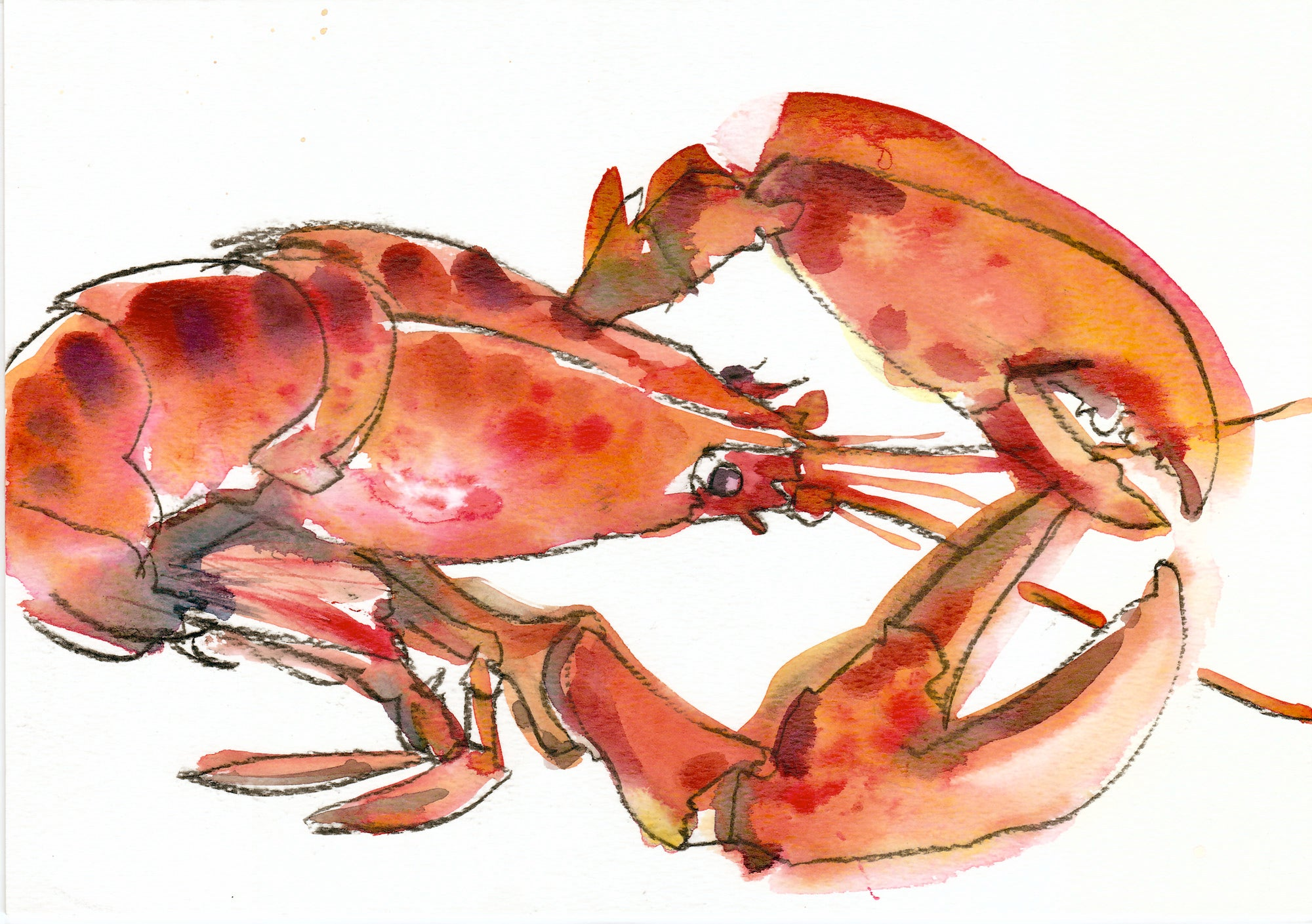 Newlyn Lobster 1 Original by Sarah Bell