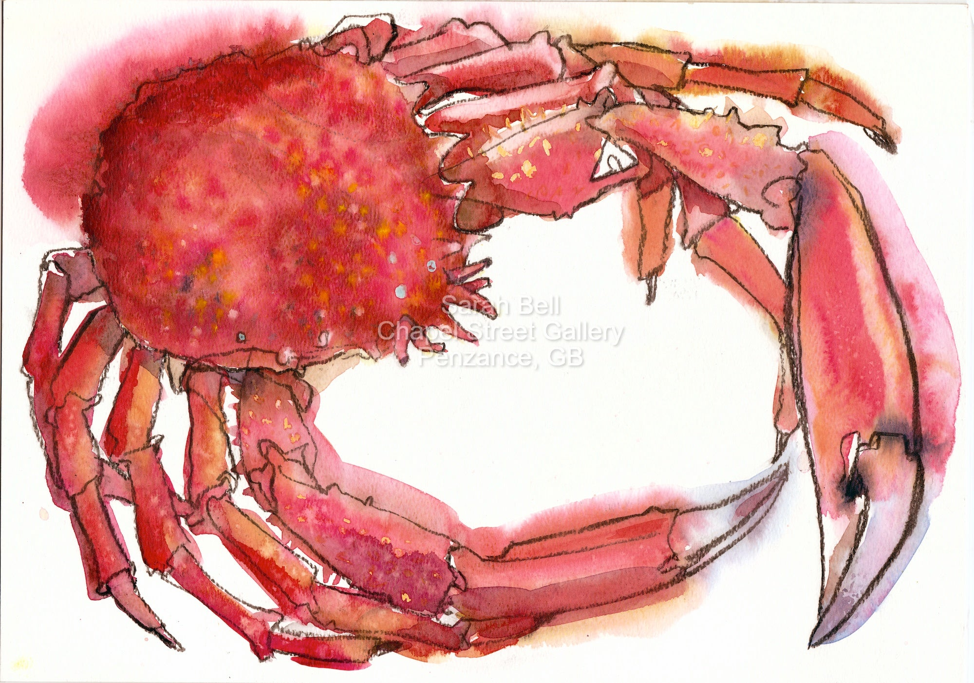 """Spider Crab 2"" Original Crab Charcoal-Watercolour by Sarah Bell"