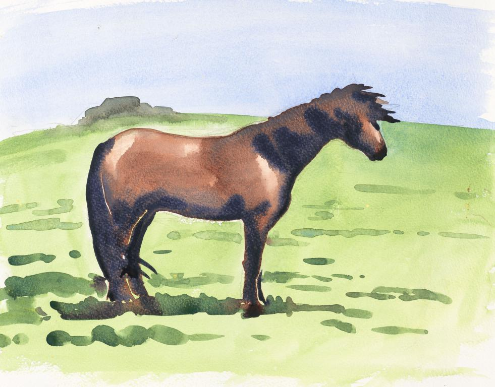 """Dartmoor Pony""Original Watercolour by Sarah Bell"