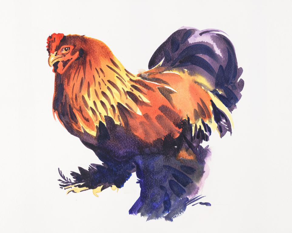 """Bramha Cockerel"" Original Watercolour by Sarah Bell"