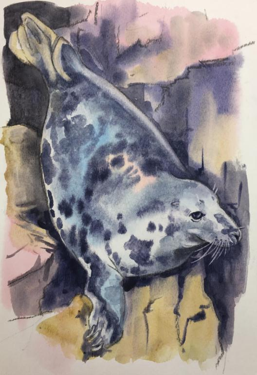 """TulipBelle"" Grey Seal Original Watercolour by Sarah Bell. Photo ID by The Cornwall Seal group Research Trust."