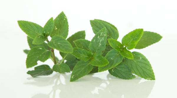 Nurturing Peppermint for Itchy Scalp Relief and Dandruff Relief