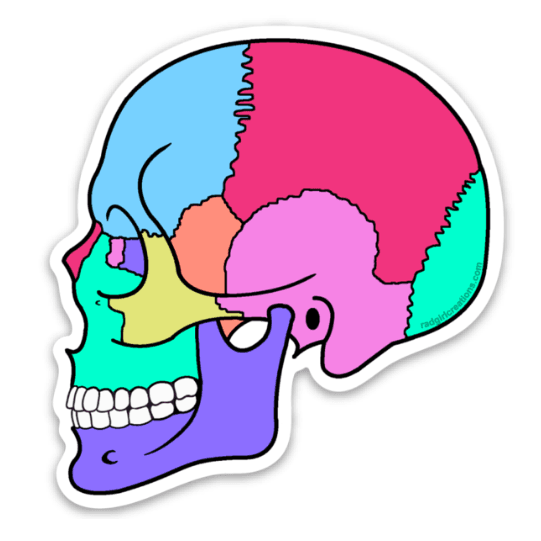 Textbook Anatomy Skull Decal - Rad Girl Creations