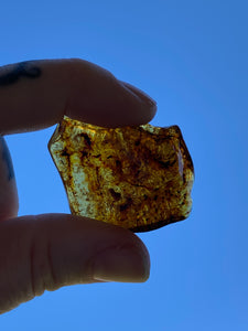 Amber Fossil Stone