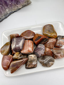 Petrified Wood Tumbled Stone (1) | Petrified Wood Polished | Crystals Stones Rocks & Minerals