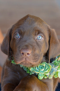Are Succulents Poisonous To Dogs?