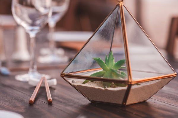 Can Succulents Grow In Sand?
