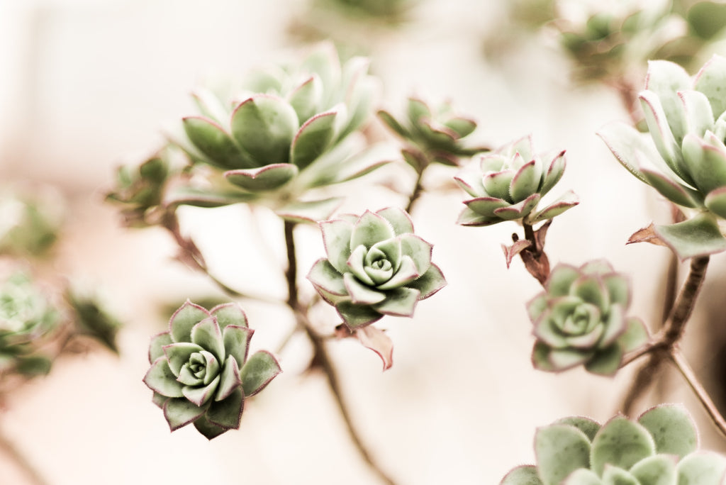 the best ways to propagate succulents