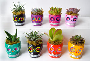 8pk Day of the Dead Skull Succulent Set