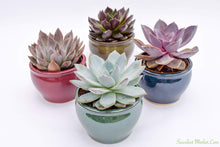 Echeveria Set - 4 Inch Glazed Pots - 4 Pack