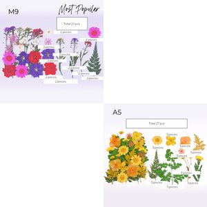 DIY 20cm by 15cm Pressed Flower Frame Kit
