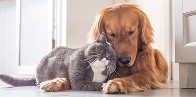 At Home Pet Care Tips for Your Furry Friend