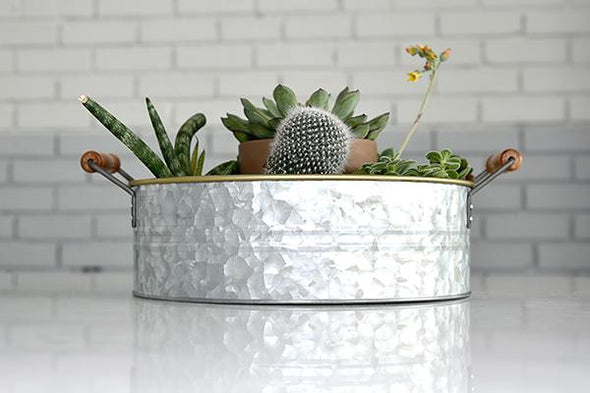 Silver galvanized metal tray with wood handles displaying succulent garden. On white background.