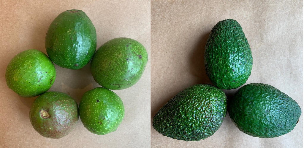 The Indian Avocado vs. Hass Avocado: What's the difference?