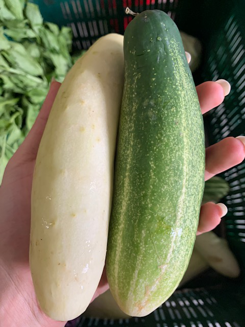 The Bitter Cucumber: What it is, and how you can get rid of it!