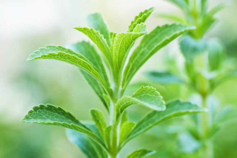 Natural Stevia vs. Artificial Sucralose