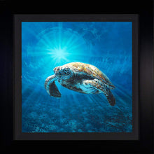 Load image into Gallery viewer, Lone Turtle by Rodel Gonzalez (framed metal print)