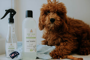 "8 oz. Doggone Soak Dog ""Re-Fresh"" Spray"