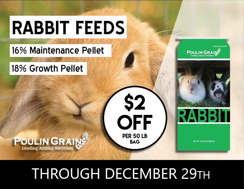 Rabbit Feed Special