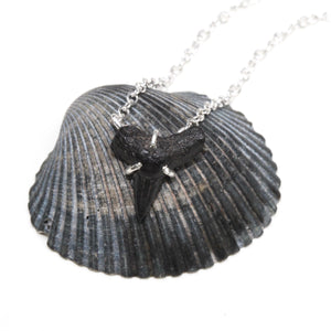 Fossilized Shark Tooth Necklace
