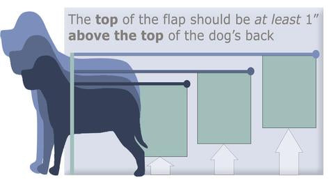 "The top of the flap should be at least 1"" above the top of the dog's back"