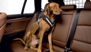 AllSafe Dog Seat Belt Harness-Dog Seatbelt-Pet's Choice Supply
