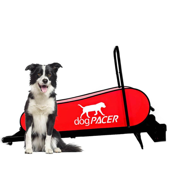 DogPacer LF 3.1 Dog Treadmill-Treadmill-Pet's Choice Supply