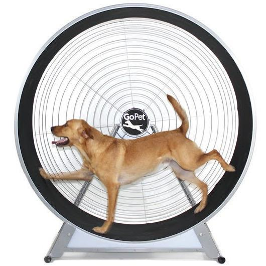 GoPet CS6020 Indoor & Outdoor Dog Treadwheel Up To 150 LBS-Treadwheel-Pet's Choice Supply