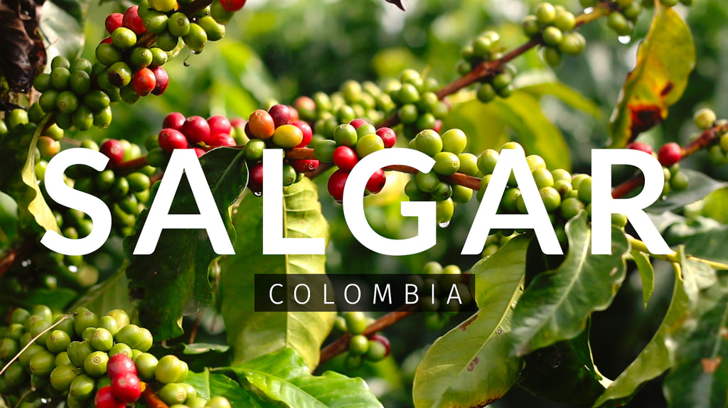 Investor Expedition: Medellín + Coffee Region (July 11th - 14th)