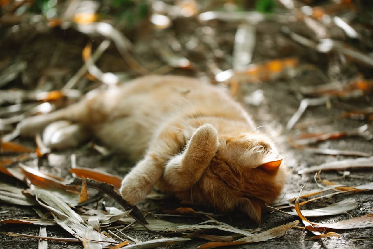 Check for fleas, ticks, and other pests that could be harmful to your cat's health