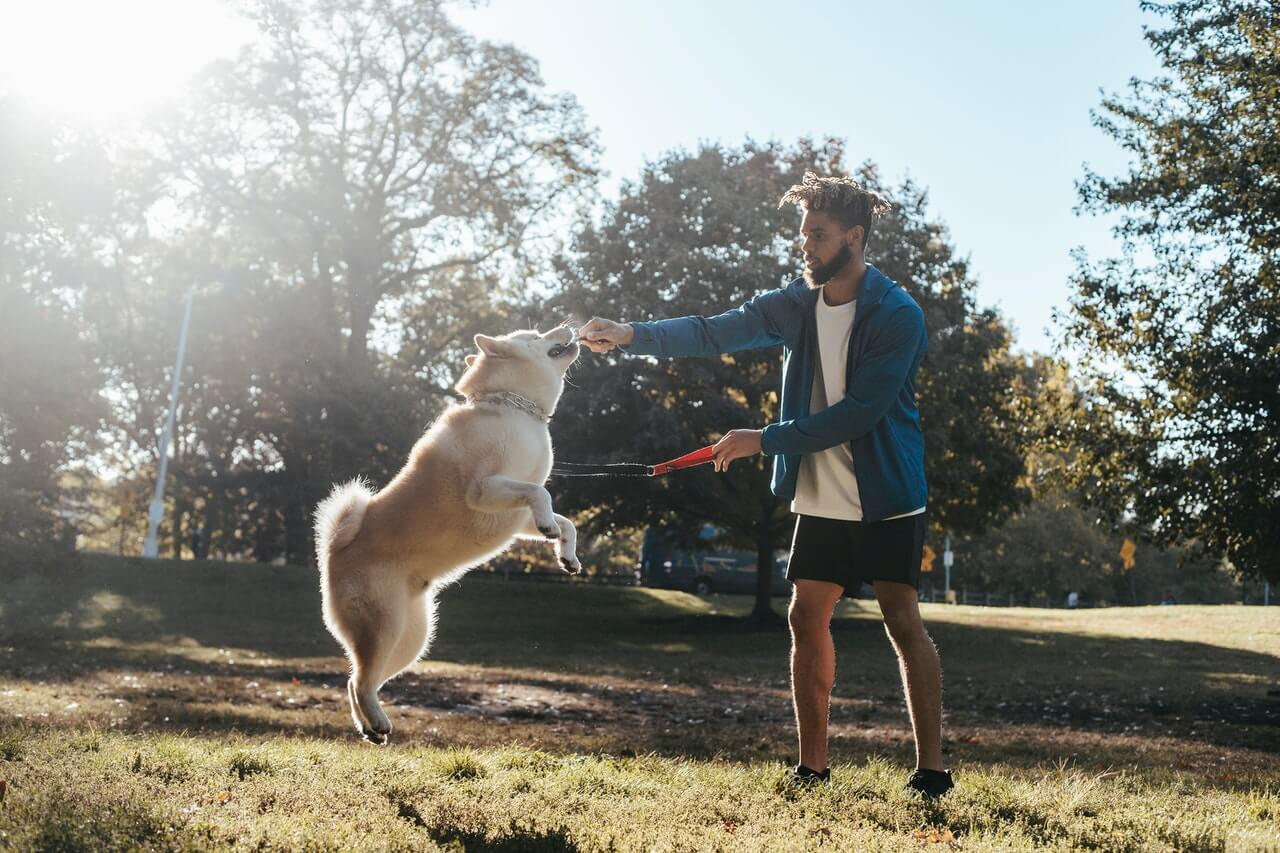 Exercise your dog every day