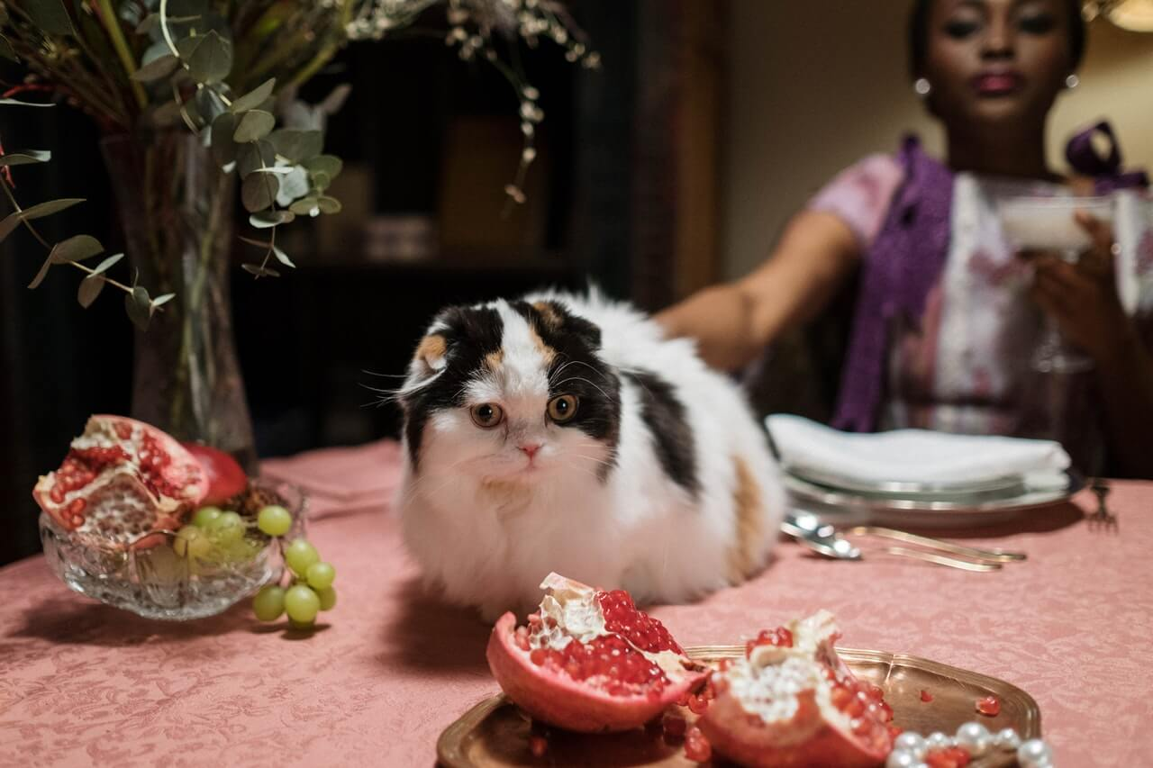 Feed your cat a healthy diet that includes meat, vegetables, and fruit