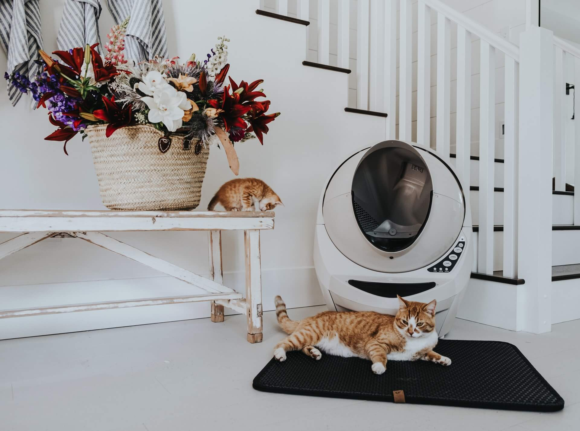 Keep your cat's litter box clean and change the litter regularly