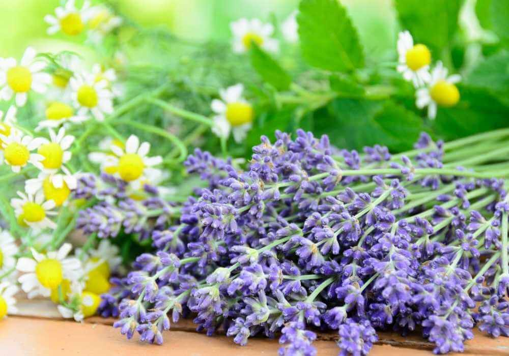 Lavender and Chamomile