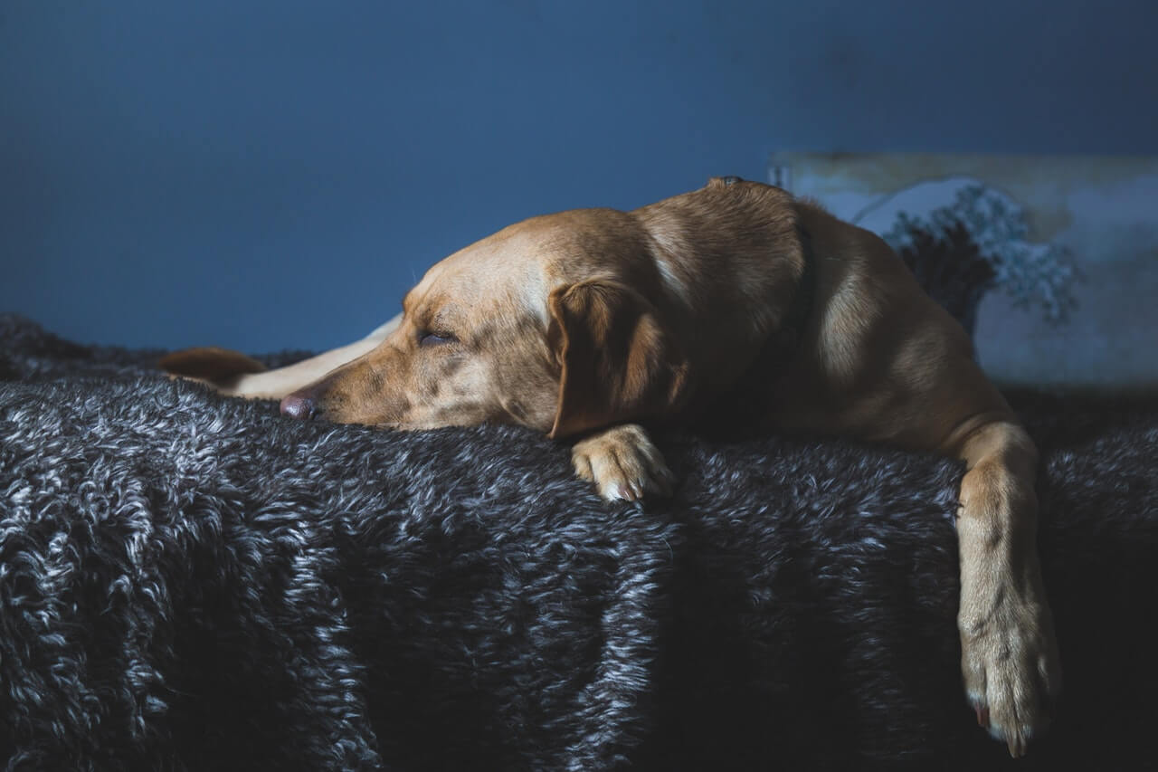 Provide a safe place for your pup to sleep, including a bed or crate