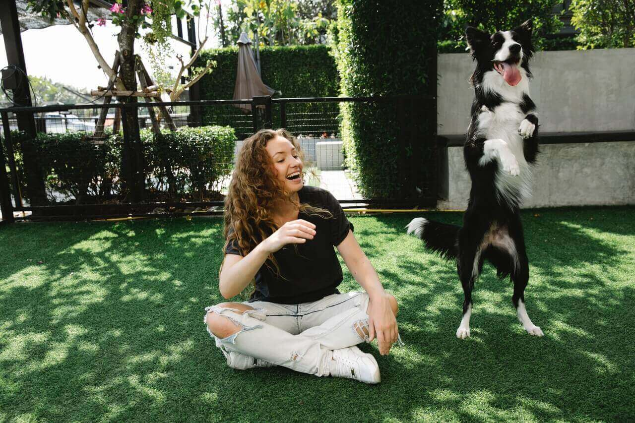 Provide plenty of exercise opportunities outside of the home for your dog