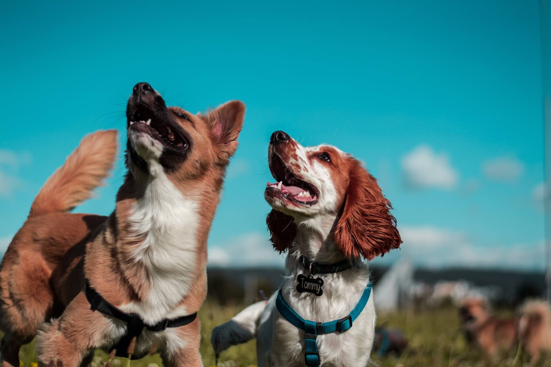 Some dogs might howl because they want the noise to stop and it's their way of communicating this with humans
