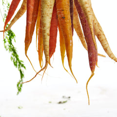 Bunch of carrots - photo by Gabriel Gurrola