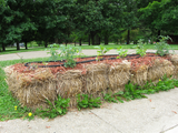 How To Successfully Plant a Straw Bale Garden