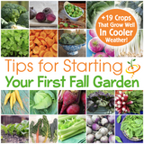 Tips for Starting Your First Fall Garden & 19 Crops That Can Withstand Freezing (or almost freezing) Temperatures!