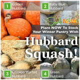 Plant These Hubbard Squash Varieties for a WELL-STOCKED Winter Pantry!